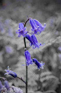 Bluebell-art