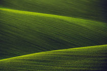 Green Shades II by David Pinzer