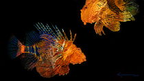 Lionfishes by Kume Bryant