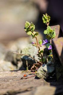 Natur im Gleisbett von Dennis Stracke