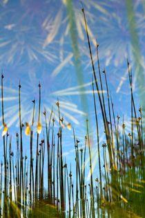 HIMMELSSTÜRMER von © Ivonne Wentzler