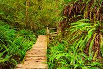 Rainforest Path von Sara Winter