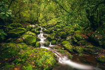 Green Creek by David Pinzer