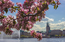 Kirschblüten an der Alster by Dennis Stracke