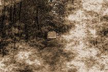 Waldweg-001-6000swc-fog-old-komp