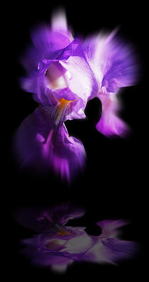 'Blütenträume 6' by Walter Zettl