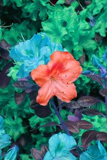 Fantaisie de couleurs I by lorenzo-fp