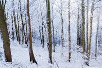 Snowy trees by Ian Darby