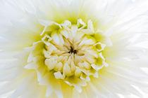 2012-08-11-999-281-dalia-bianca