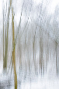 Abstract Snow Forest No 1 von Andy-Kim Möller