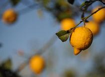 lemon by emanuele molinari
