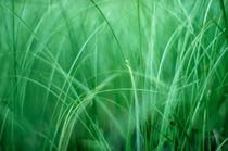 soft green grass by rgb cmyk