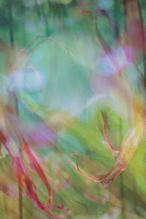 Grasgeflüster by © Ivonne Wentzler