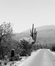 Saguaro and Everything by Kume Bryant