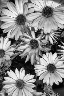 Spring life by Laura Benavides Lara