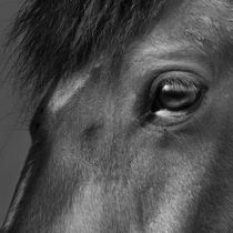L'oeil du cheval // Das Auge des Pferds // The eye of the horse  by Olivier Mavilia