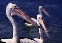 Three Pelicans (Impressionist) von David Halperin