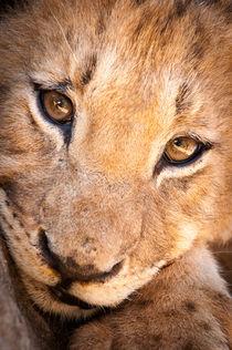 Lion cub portrait No. 1 von Andy-Kim Möller
