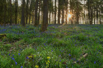 Bluebell Sunrise by David Tinsley