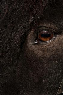 Horse eye No 1 by Andy-Kim Möller