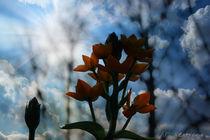 Blumenblickfang by Su Purol