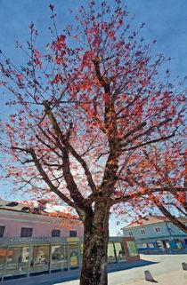Springtime #4 von Leopold Brix