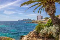 Palmen auf Mallorca von Dennis Stracke