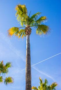 Sommer Sonne Palmen... von Dennis Stracke