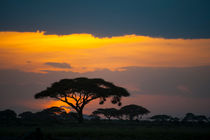 Sunset in Amboseli, Kenya by Wolfgang Kaehler