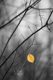 Last leaf left - Herbst by Markus Dick