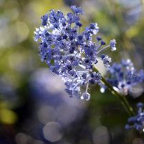blue sparks by sebastiano secondi