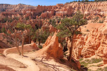 Bryce Canyon Trails by John Bailey