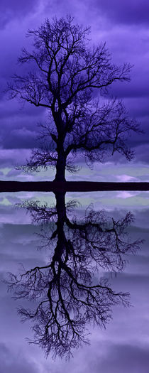 Tree Skeleton Reflection by David Pringle