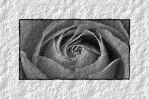 Rose-gelb-003-6000e