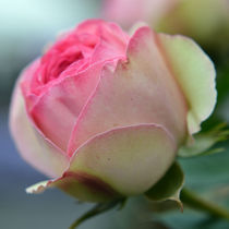 pink edges by sebastiano secondi