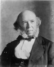 Herbert Spencer 1820-1903 by Bridgeman Art