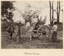 Cart pulled by two oxen at Mandalay, Burma, c.1885 (albumen prin von Bridgeman Art