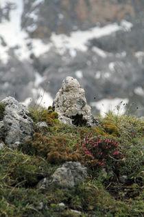 Alpenflora von Jens Berger
