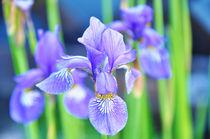 Unbekannte Blume by sonnywolf