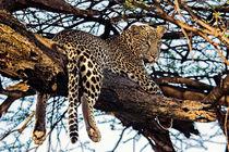 Leopard by Antonio Jorge Nunes