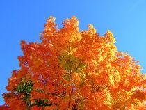 Autumn tree by dreamcatcher-media
