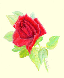 A-rose-for-trinity-lg