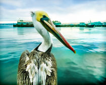 The Pelican Perspective von Priya Ghose