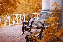 Bench in Autumn Park by cinema4design