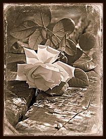 Vintage Rose von Clare Bevan