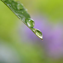 a world in a drop by sebastiano secondi