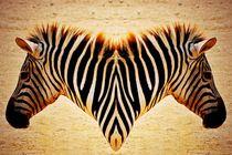 Zebra-04bcutd-6000-3