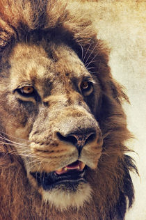 Lion by AD DESIGN Photo + PhotoArt