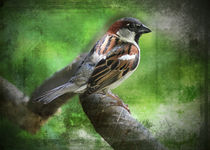My Little Chickadee by Carol Vega