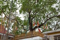 Sacred tree von Karen Cowled